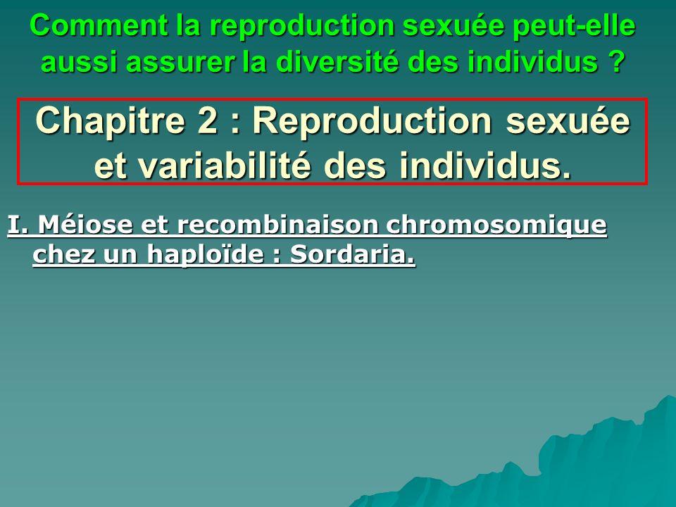 Chapitre 2 : Reproduction sexuée et variabilité des individus. I. Méiose et recombinaison chromosomique chez un haploïde : Sordaria. Comment la reprod