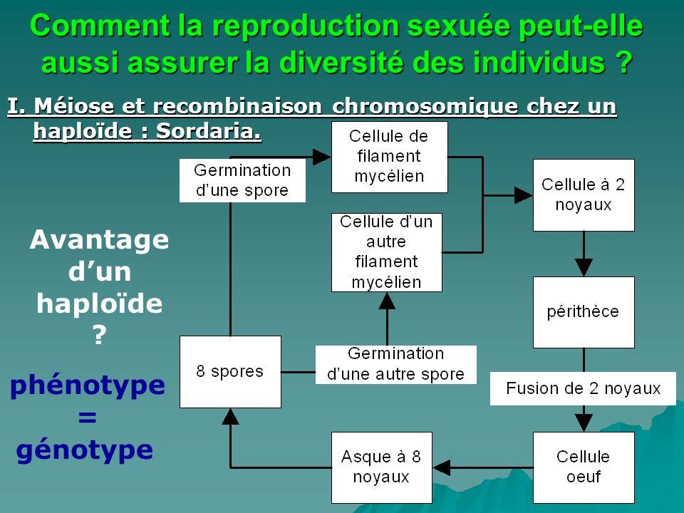I. Méiose et recombinaison chromosomique chez un haploïde : Sordaria. Comment la reproduction sexuée peut-elle aussi assurer la diversité des individu