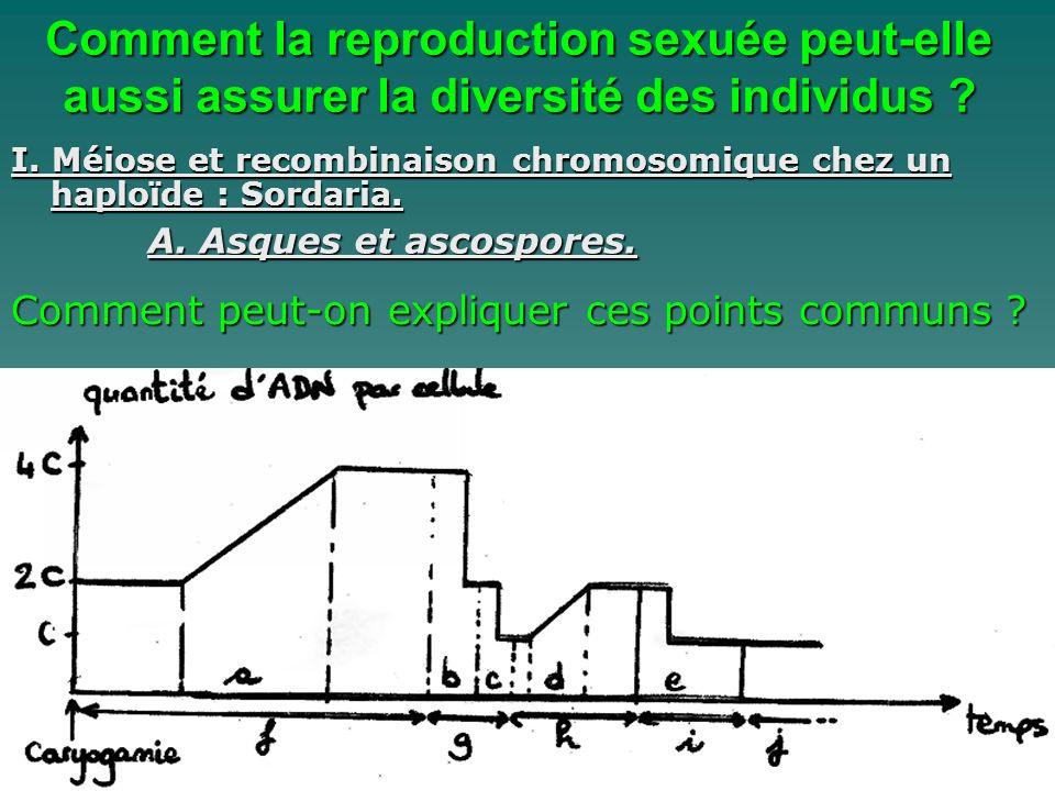 I. Méiose et recombinaison chromosomique chez un haploïde : Sordaria. A. Asques et ascospores. Comment la reproduction sexuée peut-elle aussi assurer