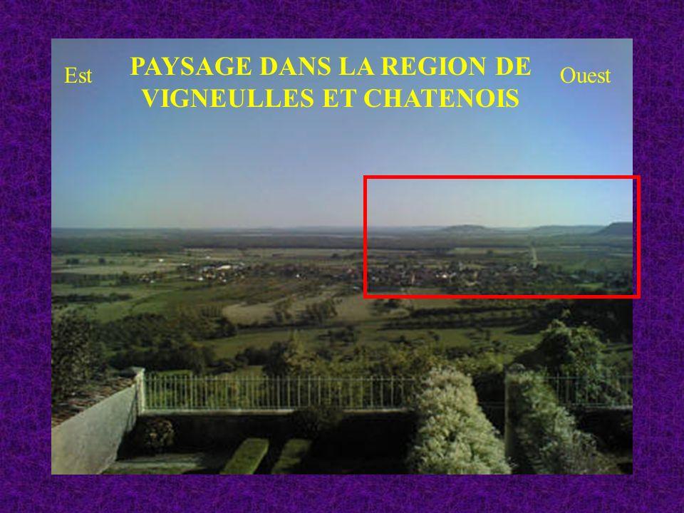 PAYSAGE DANS LA REGION DE VIGNEULLES ET CHATENOIS EstOuest