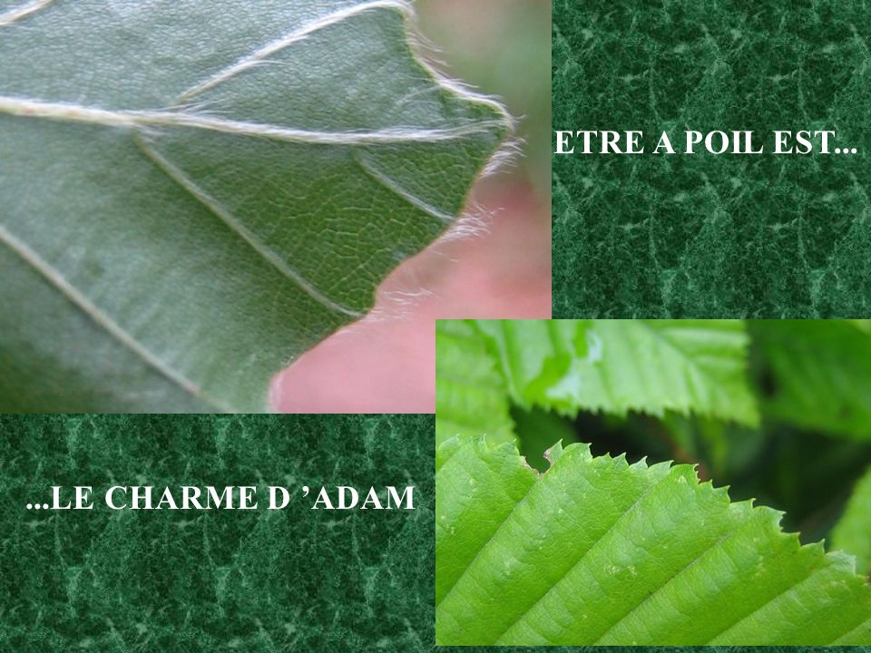 ...LE CHARME D ADAM ETRE A POIL EST...