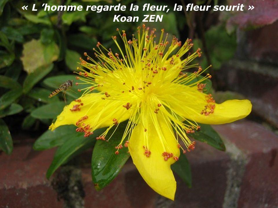 « L homme regarde la fleur, la fleur sourit » Koan ZEN