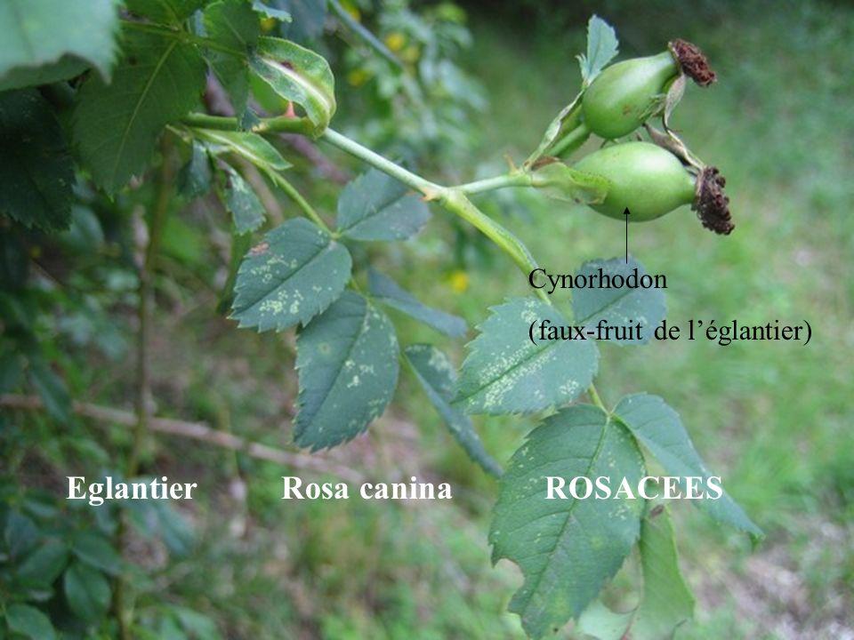 EXPLICATION : Zones à argiles à silex dans le bois du Roule (coulées de solifluxion) : glissement lent de largile à silex le long des pentes