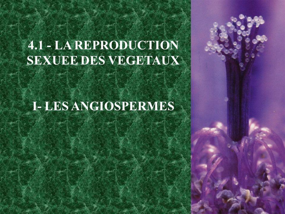 4.1 - LA REPRODUCTION SEXUEE DES VEGETAUX I- LES ANGIOSPERMES