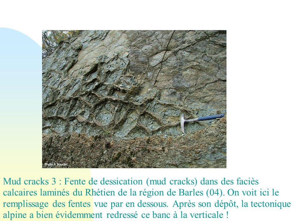 Mud cracks 3 : Fente de dessication (mud cracks) dans des faciès calcaires laminés du Rhétien de la région de Barles (04). On voit ici le remplissage