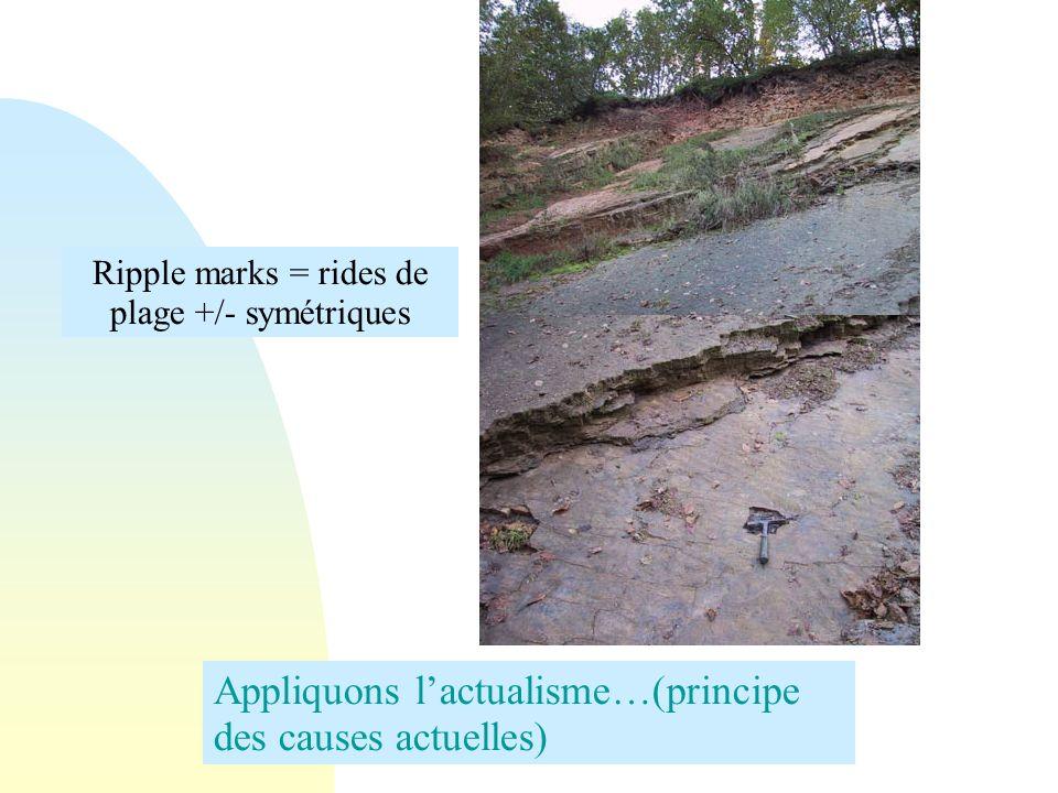 Appliquons lactualisme…(principe des causes actuelles) Ripple marks = rides de plage +/- symétriques