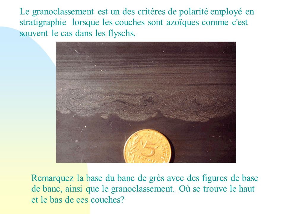 Pistes Grès de May : Pistes d organismes sur la surface supérieure d un grès de l Ordovicien au sud de Caen (14).