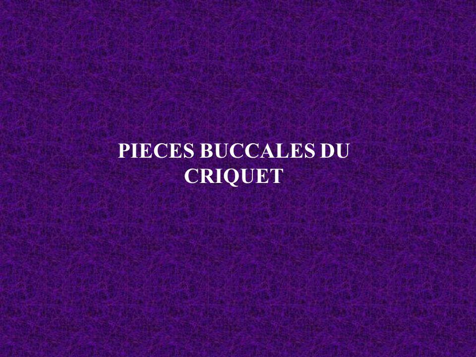 PIECES BUCCALES DU CRIQUET