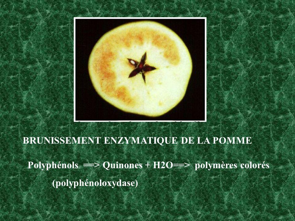 BRUNISSEMENT ENZYMATIQUE DE LA POMME Polyphénols ==> Quinones + H2O==> polymères colorés (polyphénoloxydase)
