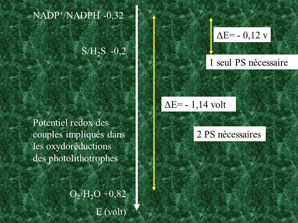 NADP + /NADPH -0,32 S/H 2 S -0,2 Potentiel redox des couples impliqués dans les oxydoréductions des photolithotrophes O 2 /H 2 O +0,82 E (volt) ΔE= -
