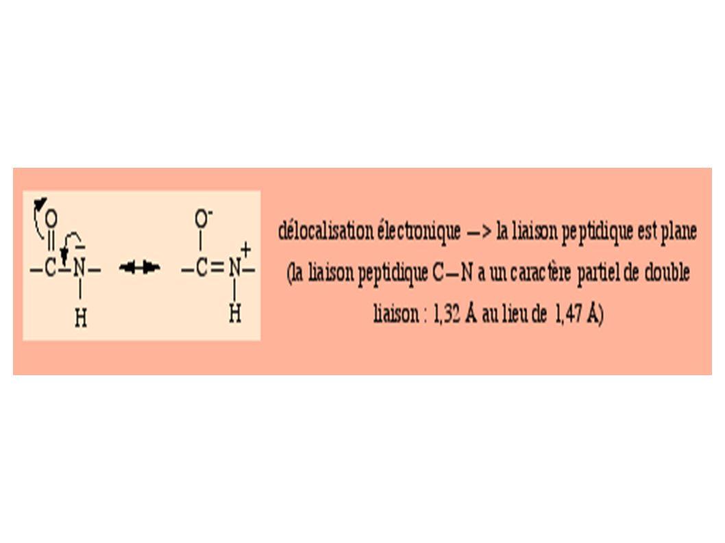 Dans l hémoglobine d un sujet atteint de drépanocytose le 6ème acide aminé de chacune des 2 sous unités béta (en jaune) de la molécule est une valine (acide aminé non polaire) au lieu d un glutamate (acide aminé chargé -).