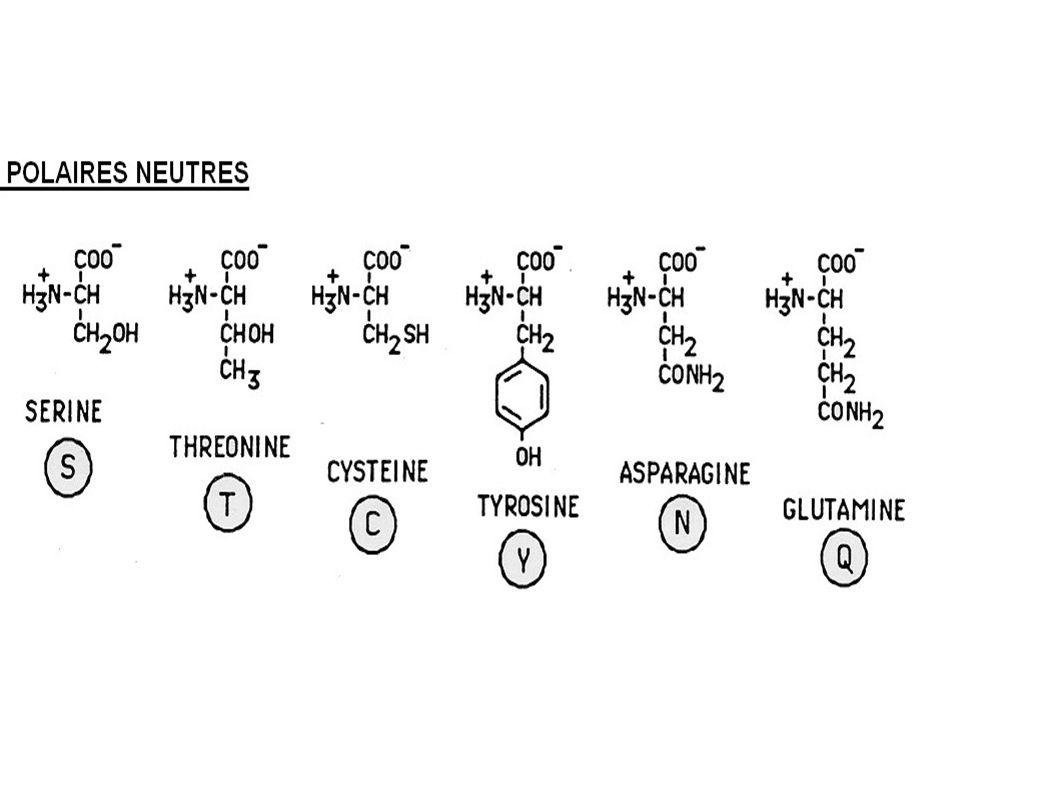 La fixation du dioxygène sur l hème du côté de l histidine 64