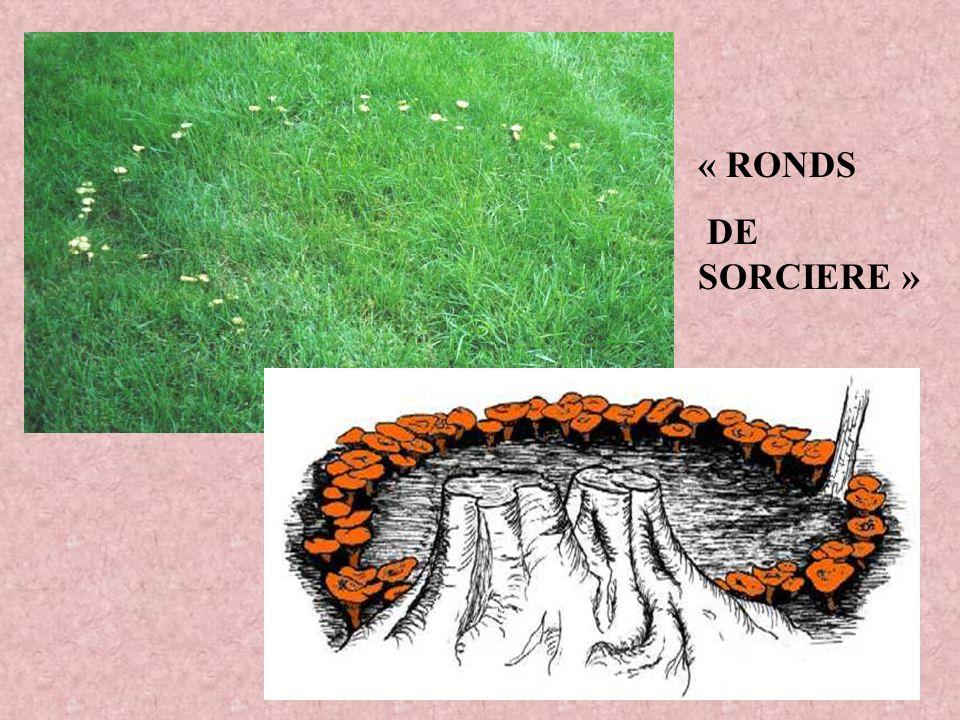 « RONDS DE SORCIERE »