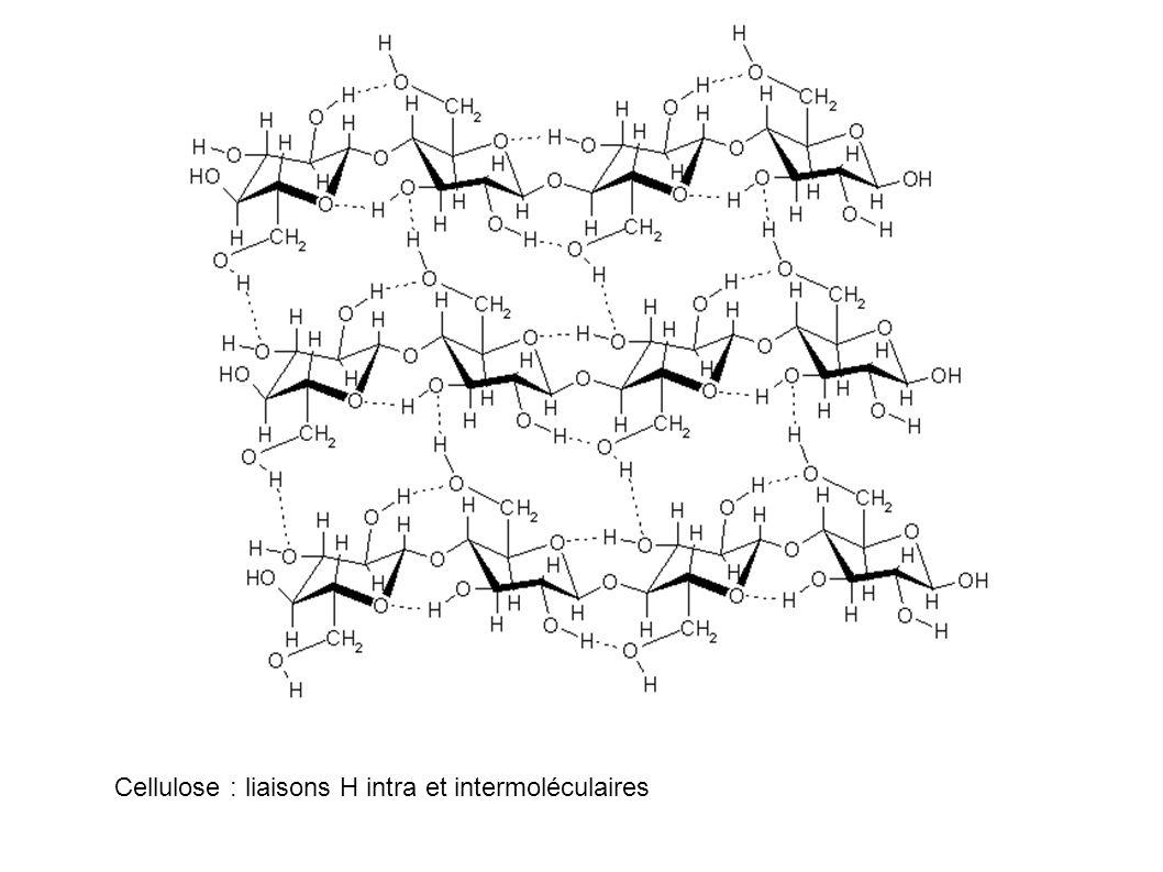 Cellulose : liaisons H intra et intermoléculaires
