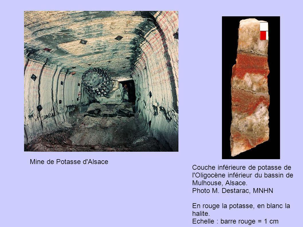 Couche inférieure de potasse de l'Oligocène inférieur du bassin de Mulhouse, Alsace. Photo M. Destarac, MNHN En rouge la potasse, en blanc la halite.