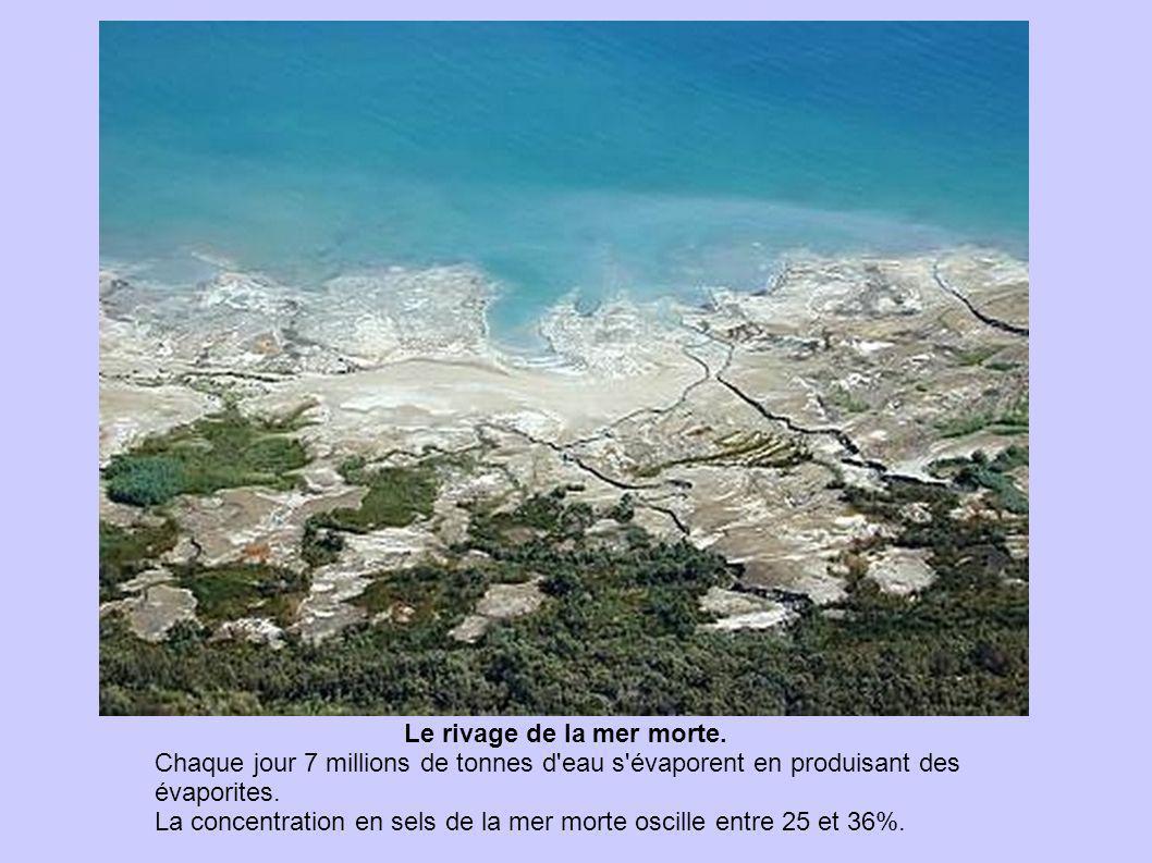 Le rivage de la mer morte. Chaque jour 7 millions de tonnes d'eau s'évaporent en produisant des évaporites. La concentration en sels de la mer morte o
