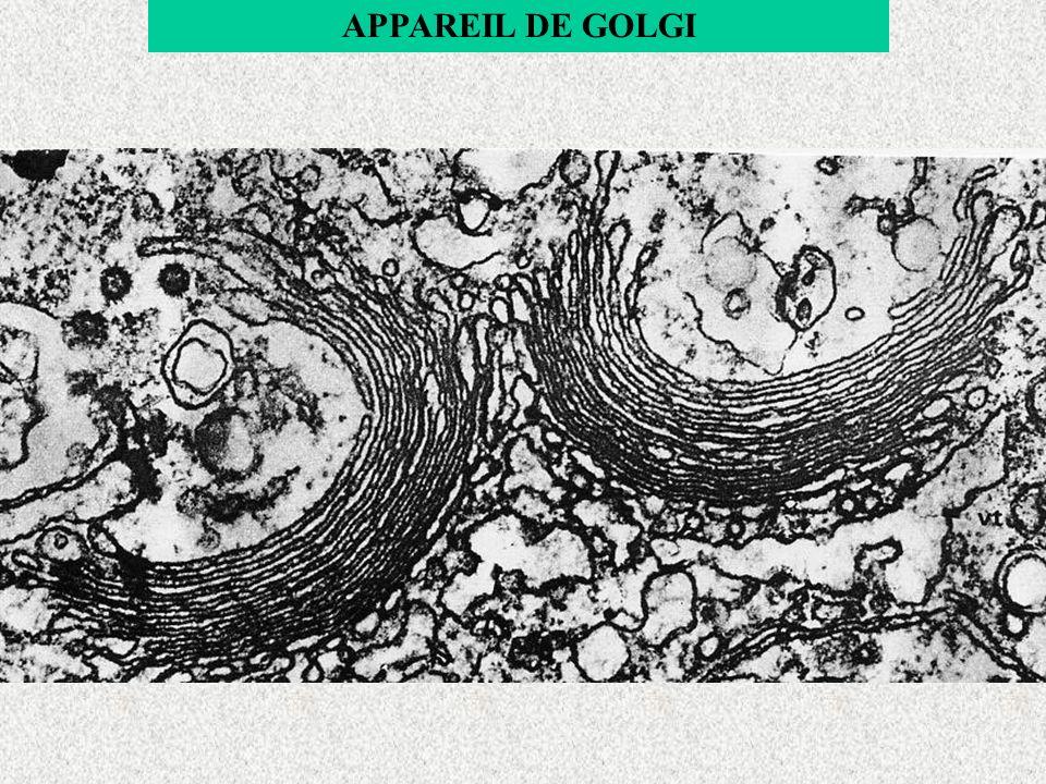 APPAREIL DE GOLGI