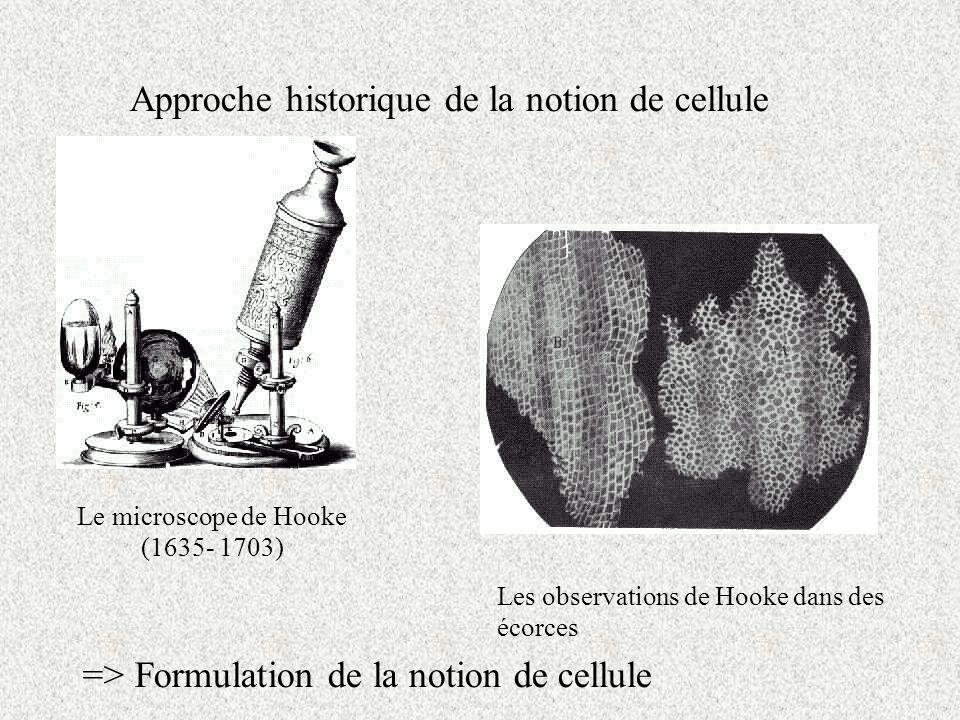 Approche historique de la notion de cellule Le microscope de Hooke (1635- 1703) Les observations de Hooke dans des écorces => Formulation de la notion