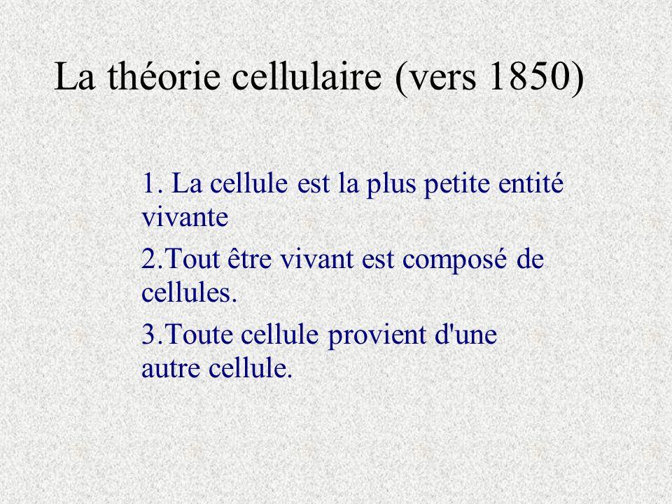 La théorie cellulaire (vers 1850) 1. La cellule est la plus petite entité vivante 2.Tout être vivant est composé de cellules. 3.Toute cellule provient