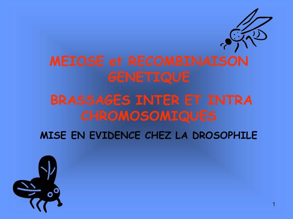 1 MEIOSE et RECOMBINAISON GENETIQUE BRASSAGES INTER ET INTRA CHROMOSOMIQUES MISE EN EVIDENCE CHEZ LA DROSOPHILE
