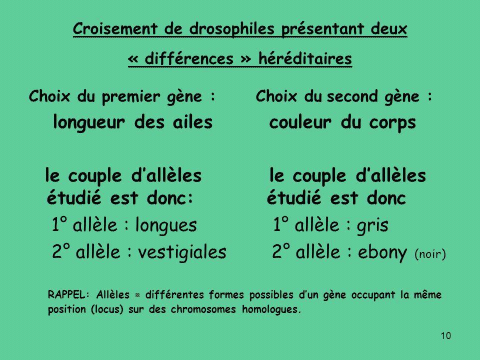 10 Croisement de drosophiles présentant deux « différences » héréditaires Choix du premier gène : longueur des ailes le couple dallèles étudié est don