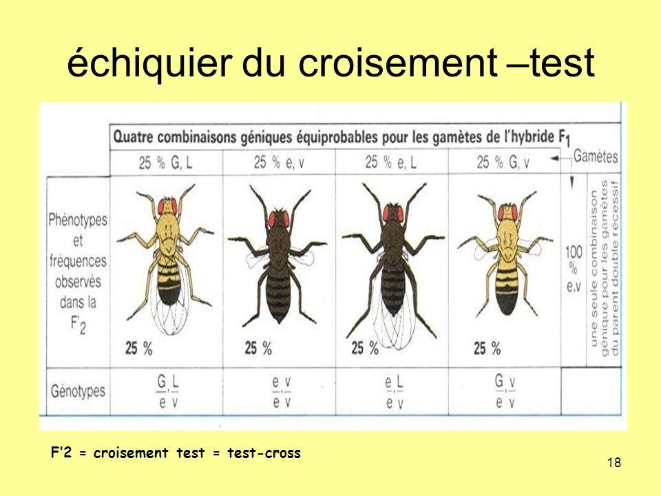 18 échiquier du croisement –test F2 = croisement test = test-cross