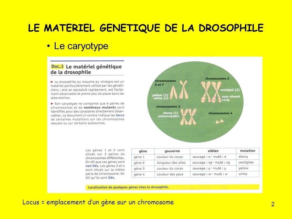 43 Rappel des écritures des génotypes Gènes non liés :1 seule barre, gènes liés :2 barres séparées par une virgule.