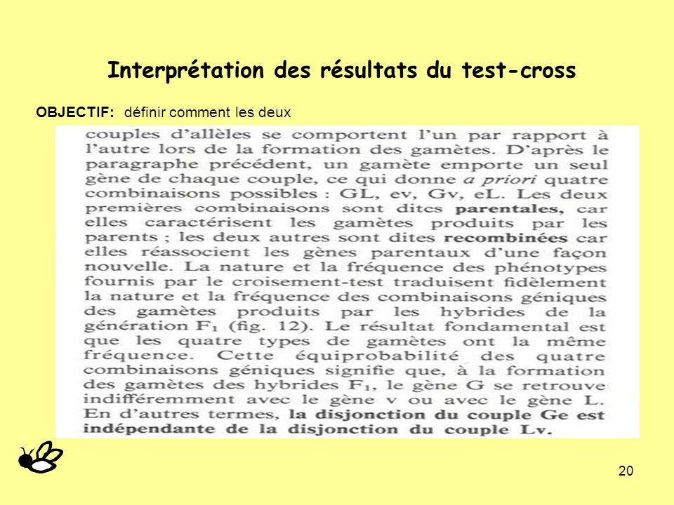 20 Interprétation des résultats du test-cross OBJECTIF: définir comment les deux