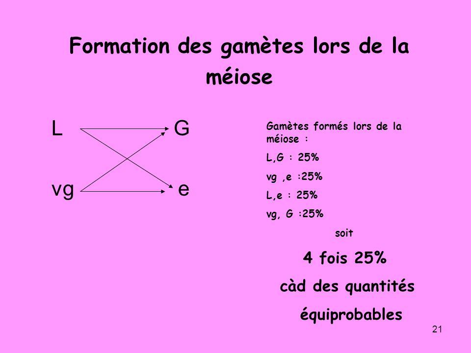 21 Formation des gamètes lors de la méiose L G vg e Gamètes formés lors de la méiose : L,G : 25% vg,e :25% L,e : 25% vg, G :25% soit 4 fois 25% càd de