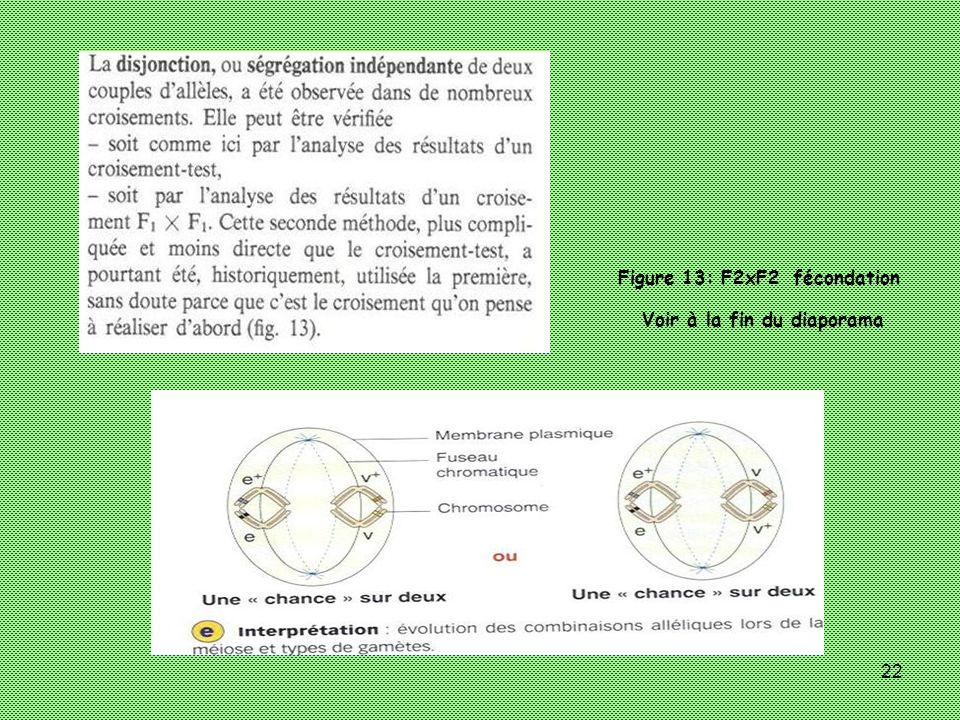 22 Figure 13: F2xF2 fécondation Voir à la fin du diaporama