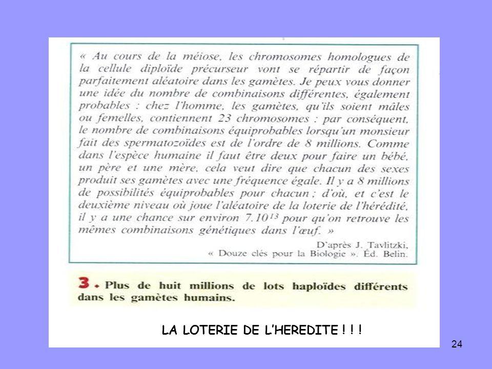 24 LA LOTERIE DE LHEREDITE ! ! !