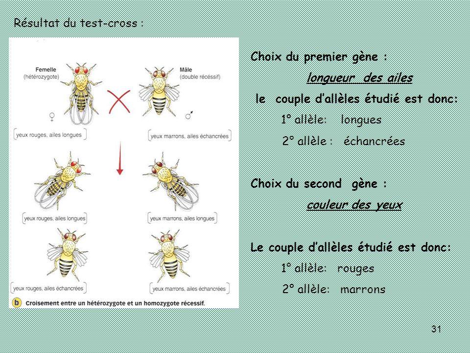 31 Choix du premier gène : longueur des ailes le couple dallèles étudié est donc: 1° allèle: longues 2° allèle : échancrées Choix du second gène : cou