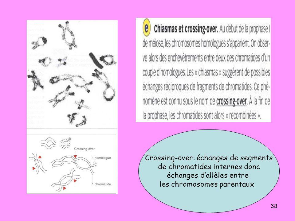38 Crossing-over: échanges de segments de chromatides internes donc échanges dallèles entre les chromosomes parentaux