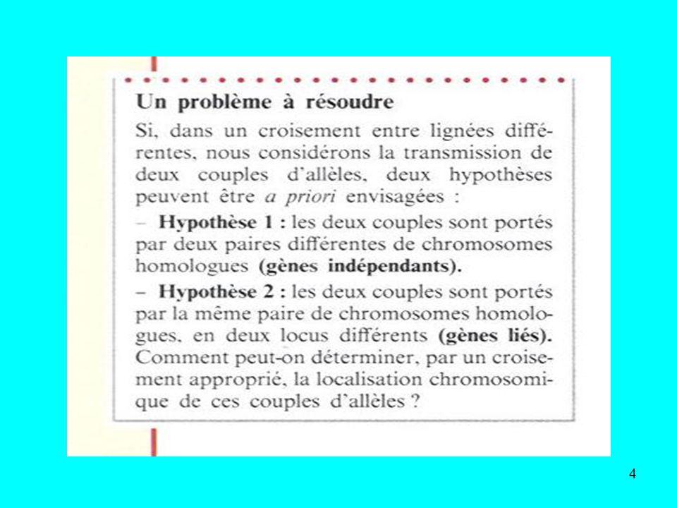 45 Lorsque les résultats du test-cross donnent quatre phénotypes avec des pourcentages différent de 25% et avec: - majorité de phénotypes parentaux : toujours supérieur à 50% - minorité de phénotypes recombinés : toujours inférieur à 50% les gènes sont liés càd portés par une seule paire et même paire de chromosomes Il y a eu brassage intrachromosomique soit une répartition nouvelle des allèles sur les chromosomes, à la suite dun crossing –over