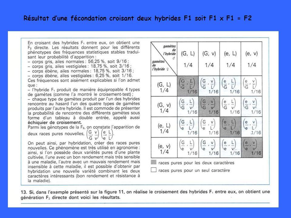48 Résultat dune fécondation croisant deux hybrides F1 soit F1 x F1 = F2