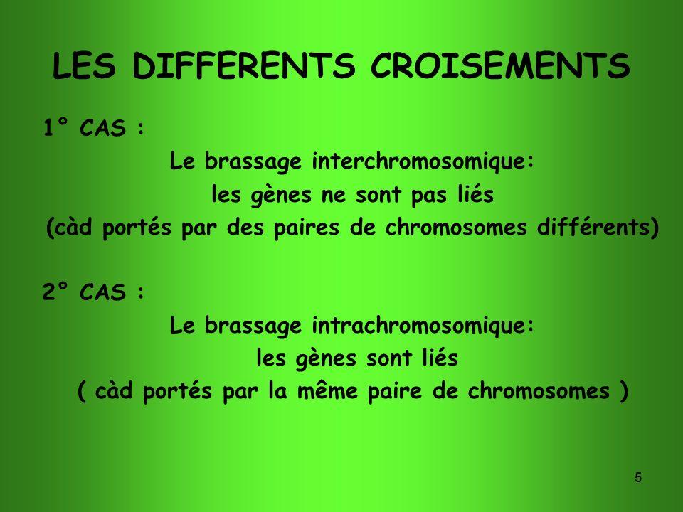 5 LES DIFFERENTS CROISEMENTS 1° CAS : Le brassage interchromosomique: les gènes ne sont pas liés (càd portés par des paires de chromosomes différents)