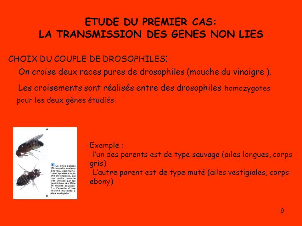 9 ETUDE DU PREMIER CAS: LA TRANSMISSION DES GENES NON LIES CHOIX DU COUPLE DE DROSOPHILES : On croise deux races pures de drosophiles (mouche du vinai