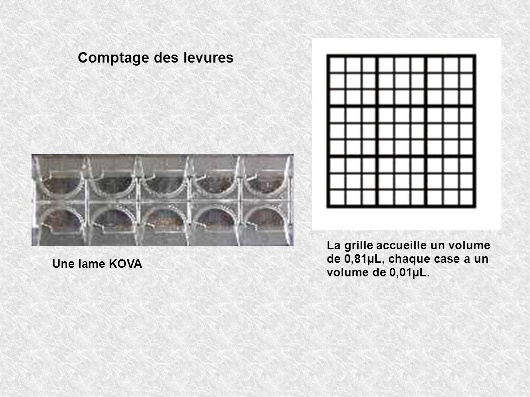 Comptage des levures Une lame KOVA La grille accueille un volume de 0,81µL, chaque case a un volume de 0,01µL.