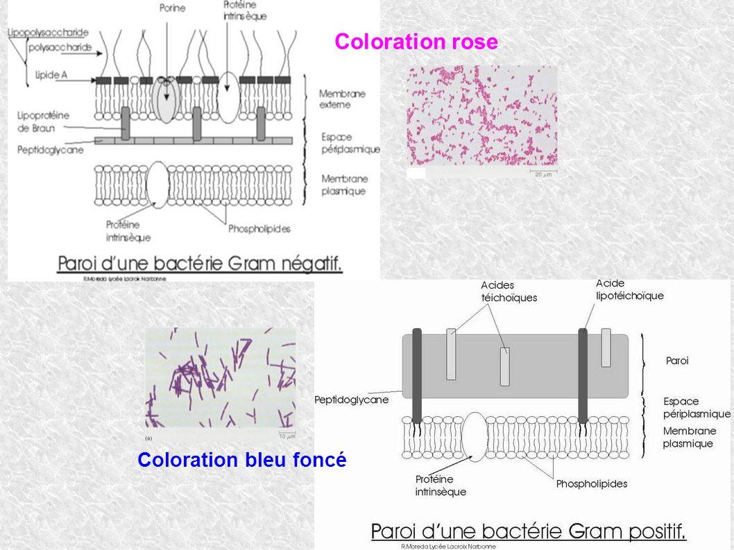 Coloration rose Coloration bleu foncé
