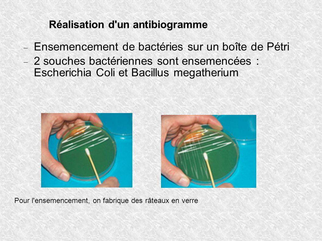 Réalisation d'un antibiogramme Ensemencement de bactéries sur un boîte de Pétri 2 souches bactériennes sont ensemencées : Escherichia Coli et Bacillus