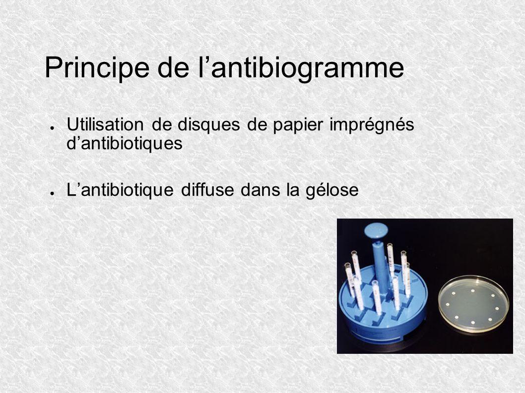 Principe de lantibiogramme Utilisation de disques de papier imprégnés dantibiotiques Lantibiotique diffuse dans la gélose