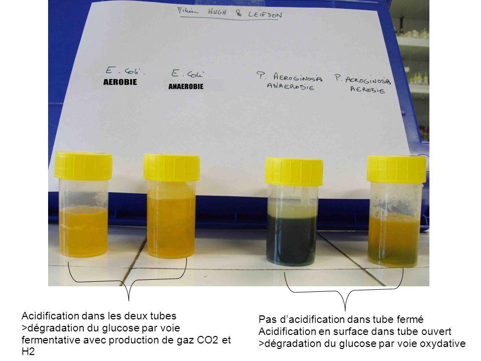 Pas dacidification dans tube fermé Acidification en surface dans tube ouvert >dégradation du glucose par voie oxydative Acidification dans les deux tu