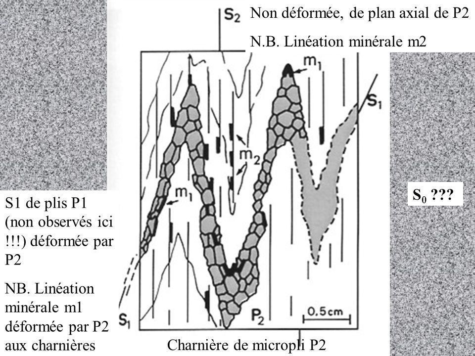 Non déformée, de plan axial de P2 N.B.