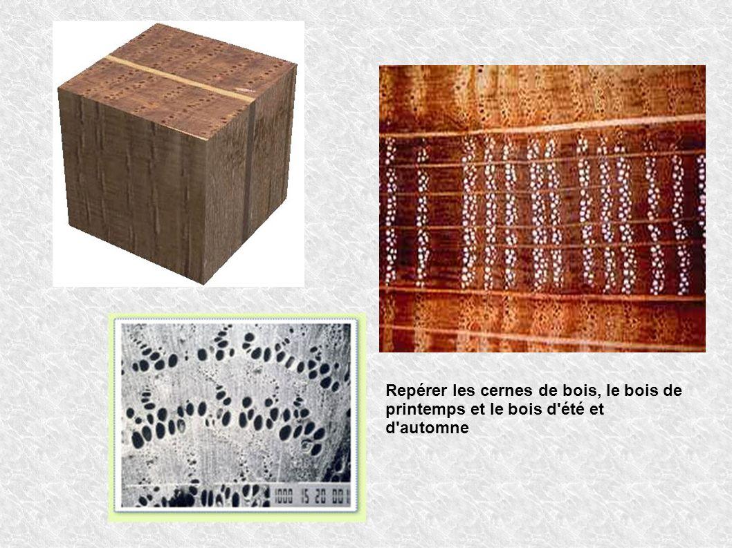 Repérer les cernes de bois, le bois de printemps et le bois d'été et d'automne