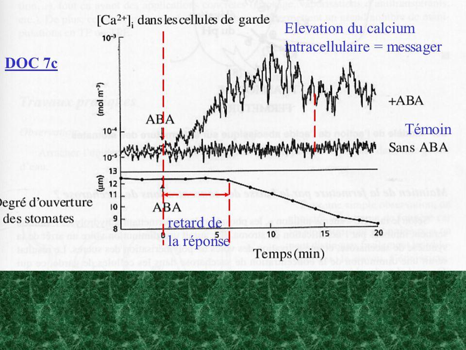 DOC 7c Témoin Elevation du calcium intracellulaire = messager retard de la réponse