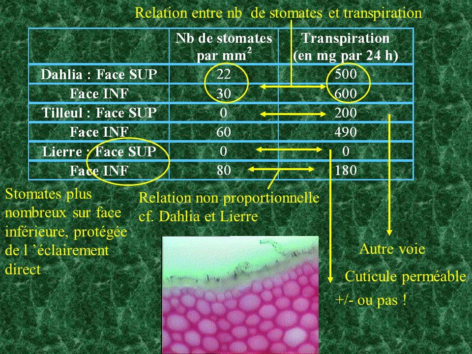 Autre voie +/- ou pas ! Cuticule perméable Stomates plus nombreux sur face inférieure, protégée de l éclairement direct Relation entre nb de stomates
