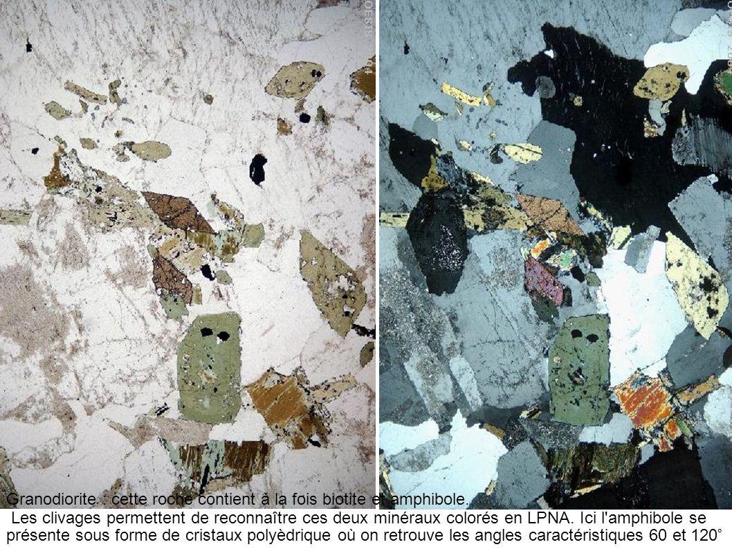 Granodiorite : cette roche contient à la fois biotite et amphibole. Les clivages permettent de reconnaître ces deux minéraux colorés en LPNA. Ici l'am