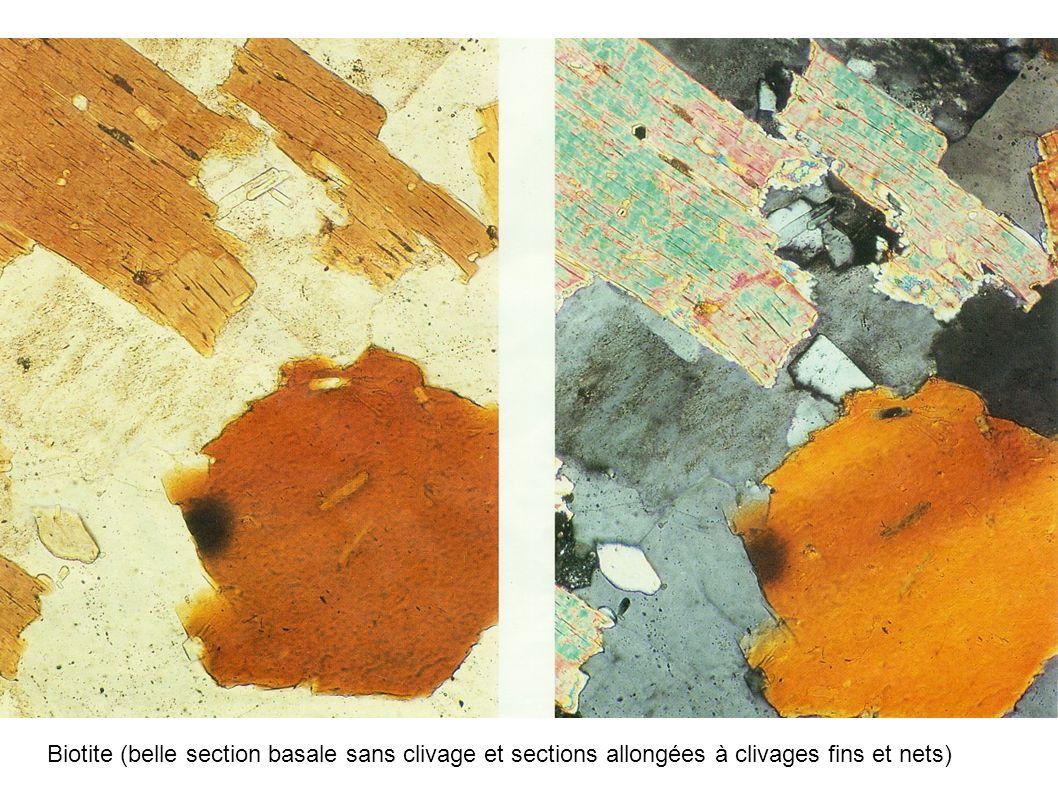 Biotite (belle section basale sans clivage et sections allongées à clivages fins et nets)