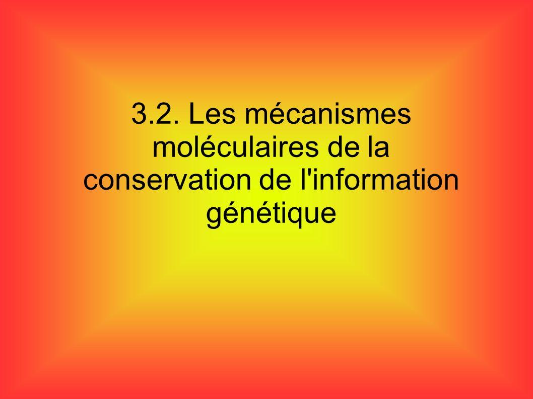 3.2. Les mécanismes moléculaires de la conservation de l'information génétique