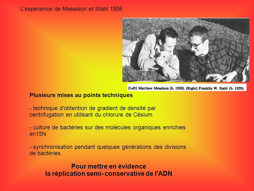 L'expérience de Meselson et Stahl 1958 Plusieurs mises au points techniques - technique d'obtention de gradient de densité par centrifugation en utili